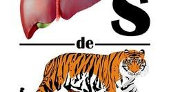 Fígados de Tigre - Paródia de Melodramas
