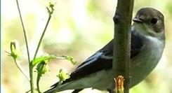 Ilhas de Migração e Estadia de Aves em Ambiente Urbano