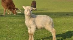 Oficina para Famílias: A Ovelha, uma Amiga que Fornece Lã!