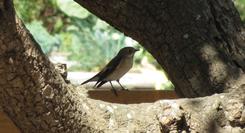 Oficina para Famílias: Quero ser Ornitólogo