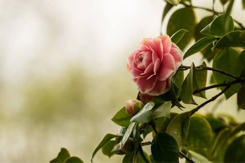 Primavera Festival da Flor