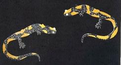 Recriar a Salamandra