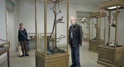 Um pombo pousou num ramo a refletir na existência